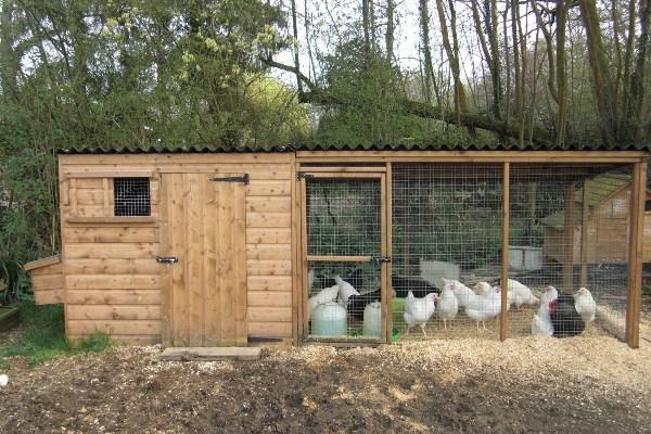 kandang ayam kayu dengan paddock