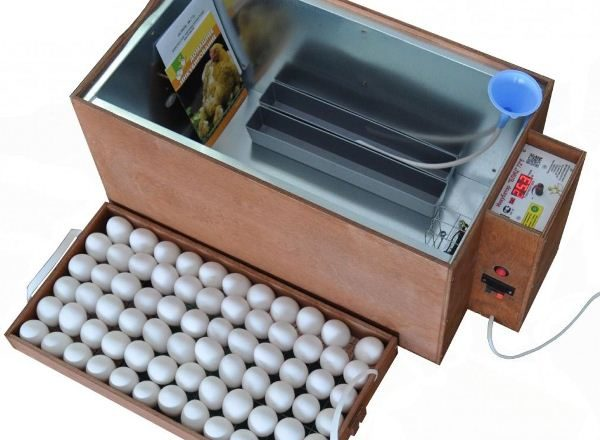 Blitz Inkubator