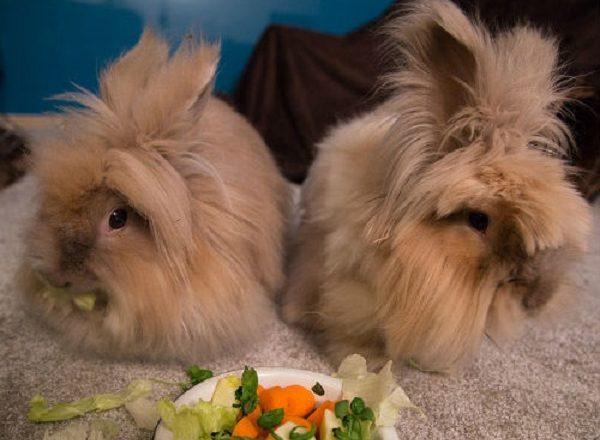 Apa yang perlu diberi makan arnab