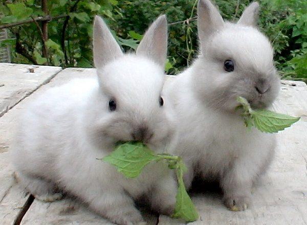 Apa yang perlu untuk memberi makan arnab