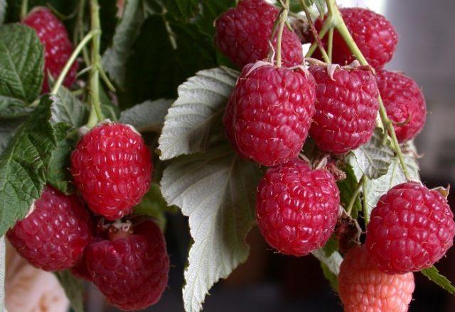 Barisan Raspberry
