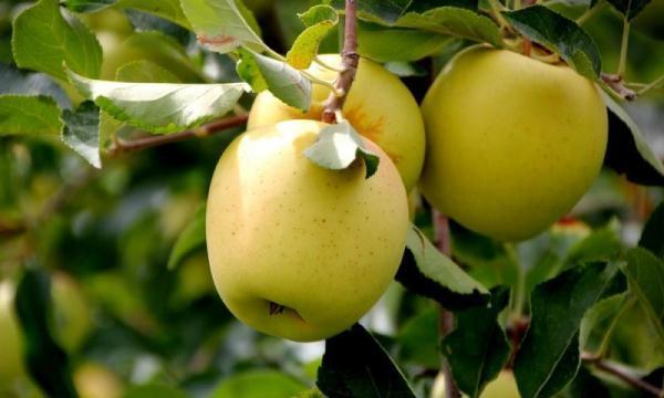 Epal emas