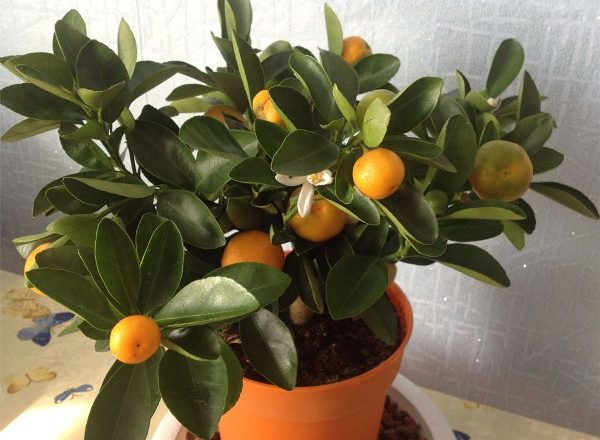 Bilik Mandarin