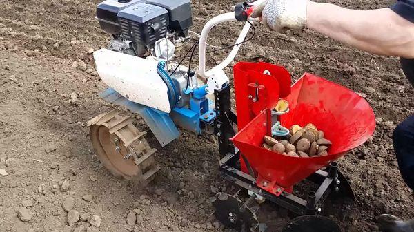 Menanam penanam kentang
