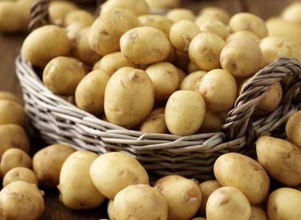 Jenis kentang awal