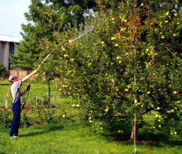 Syarat pemprosesan pokok buah-buahan