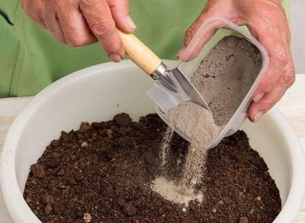 Abu boleh bercampur dengan tanah dan kemudian bertaburan di sekitar pokok.