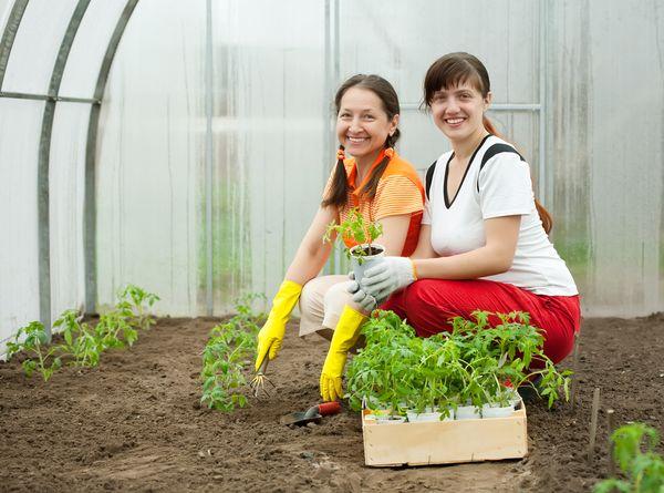 Pemangkasan benih di rumah hijau bermula pada akhir April