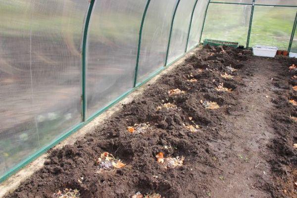 Bahan organik mesti ditambah ke telaga atau tempat tidur sebelum menanam.